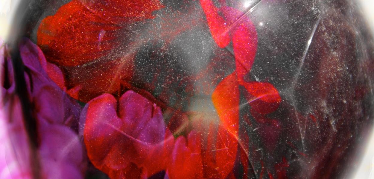 Crimson Flower Efflorescence Photo Montage ©Michael Dickel