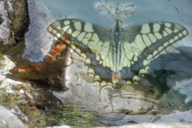 Flutterby buttefly, reflections in a stream. Lever and Lillies put you here, what do they mean?