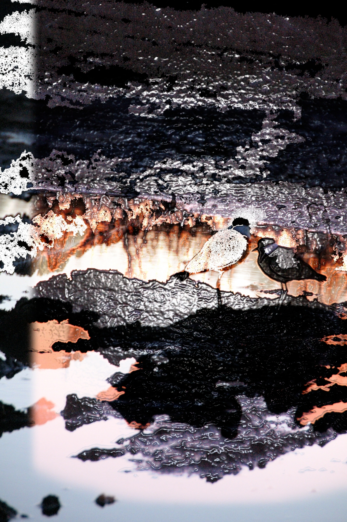 Night birds, digital photo montage ©2013 Michael Dickel