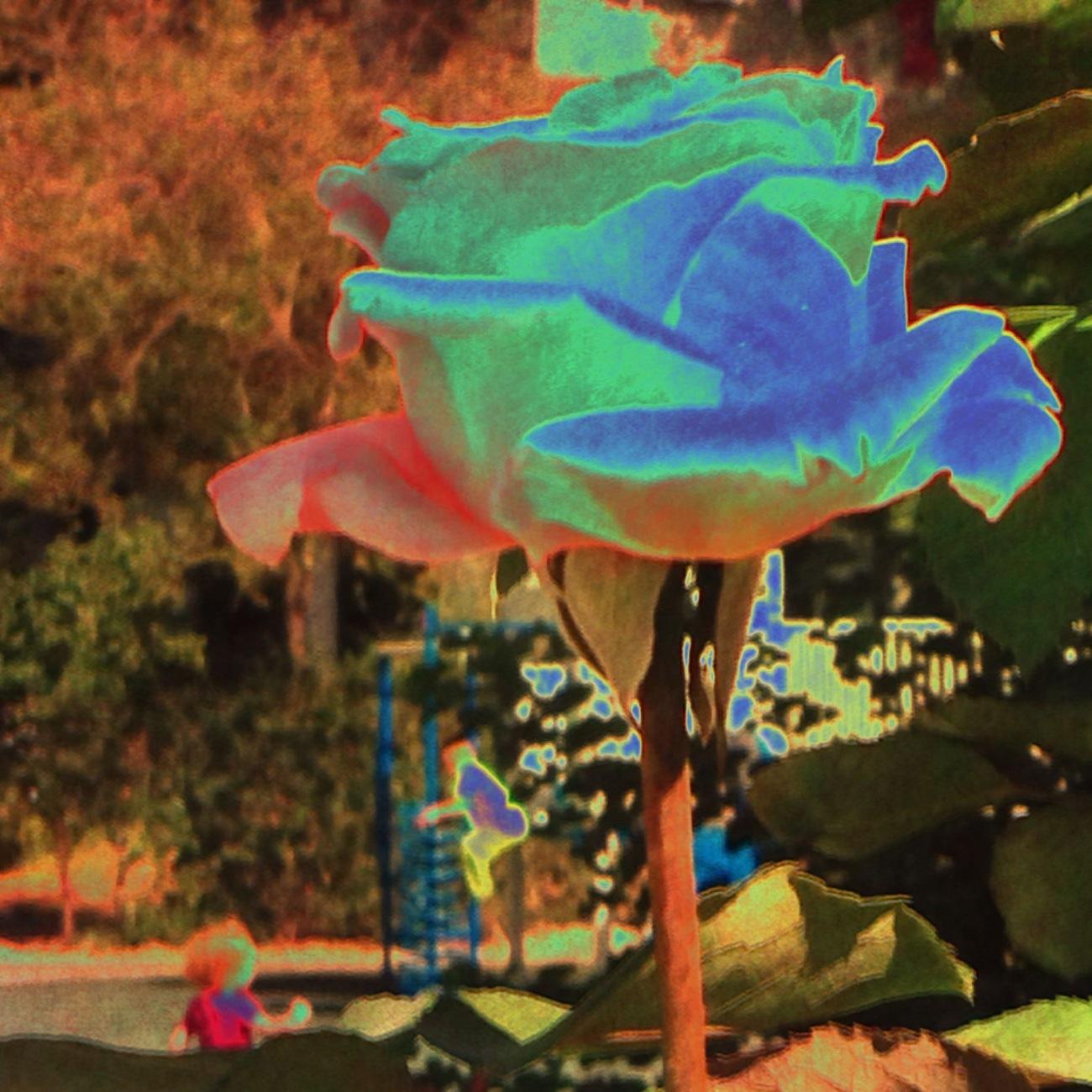 Rose art Digital art ©2015 Michael Dickel